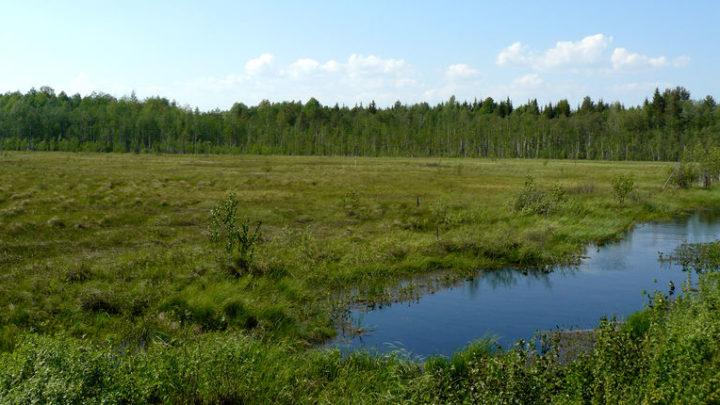 Болото Куплангское — комплексный памятник природы