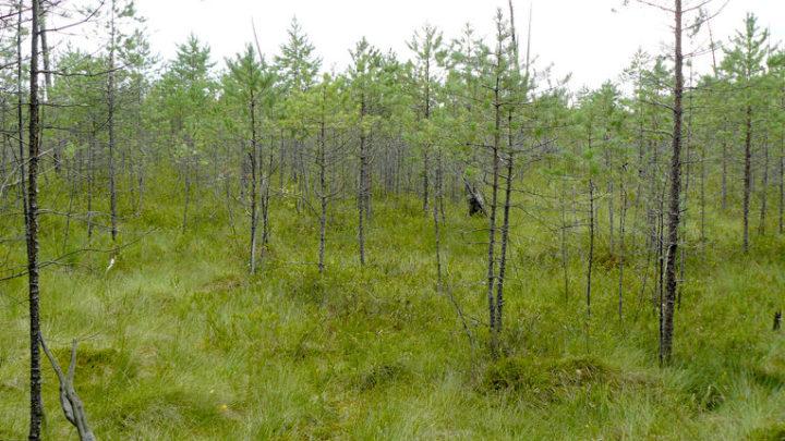 Болото Сорочинское — комплексный памятник природы