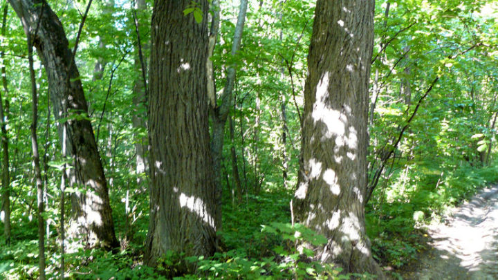 Нагорная дубрава — биологический памятник природы