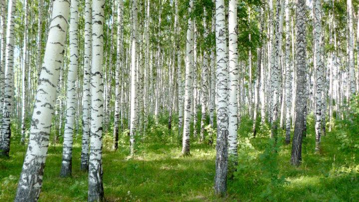Реликтовые леса — ботанический памятник природы