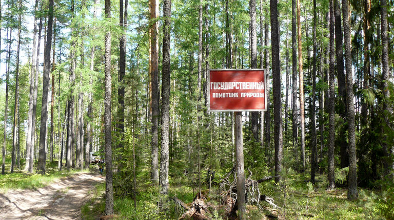 roshcha-listvennitsy-sibirskoy
