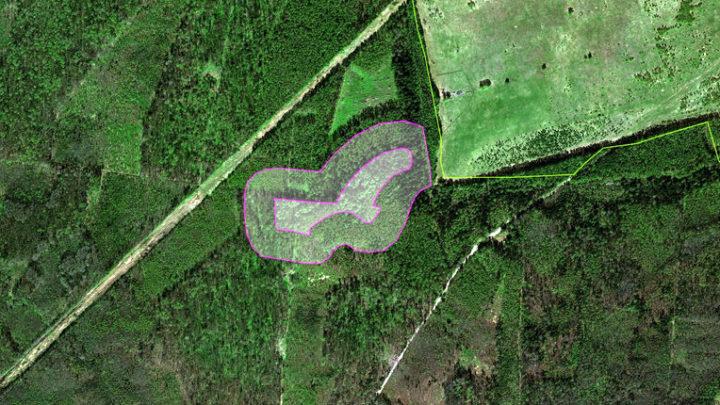 Сендинская лиственничная роща — ботанический памятник природы