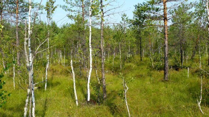 Болото Козиковское — комплексный памятник природы