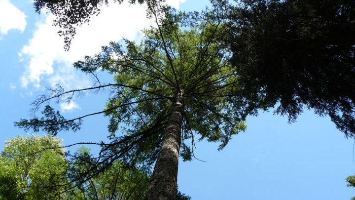 Лиственничные рощи — ботанический памятник природы