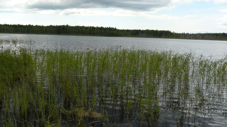 Озеро Лисичкино — гидрологический памятник природы