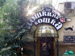 Кафе Йошкина кошка